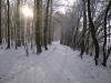 der winterliche Forst